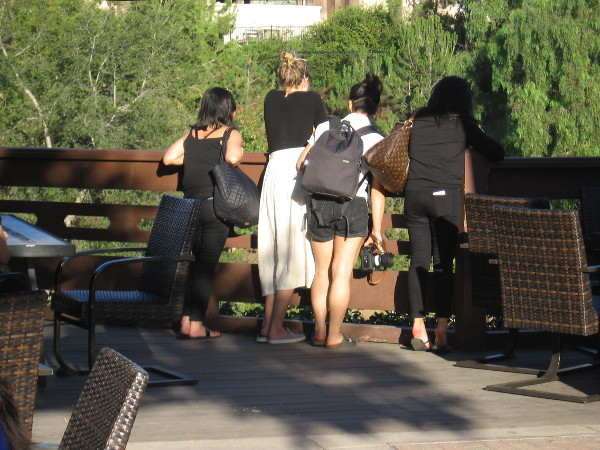 Visitors to Balboa Park peer down into the Lower Garden of the Japanese Friendship Garden from the deck of the Tea Pavilion.