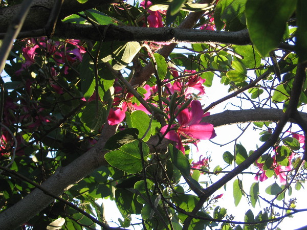 Shining blooms in a tree.