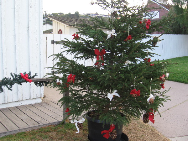 A simple but delightful little Christmas tree near the entrance of Seeley Stable.