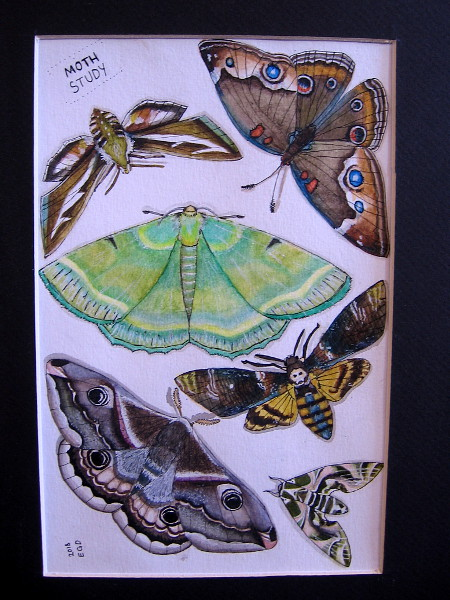 Moth Study 2018, Evelyn DuVall, watercolor and ink. IDEA Center High School.