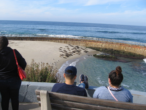 Sitting on a bench overlooking The Children's Pool, observing the resident colony of harbor seals.