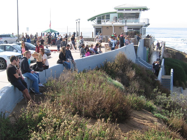 People along the wall near the lifeguard station. Many tourists now travel to La Jolla just to see the local colony of harbor seals.