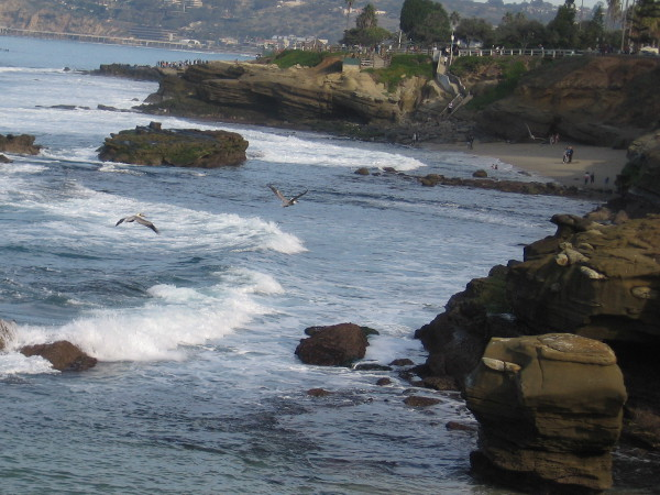The pelicans fly toward Seal Rock and Shell Beach and the rocky shoreline west of La Jolla Cove.