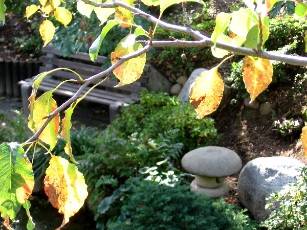 The Japanese Friendship Garden in Balboa Park is a place to find peace, wisdom and healing.