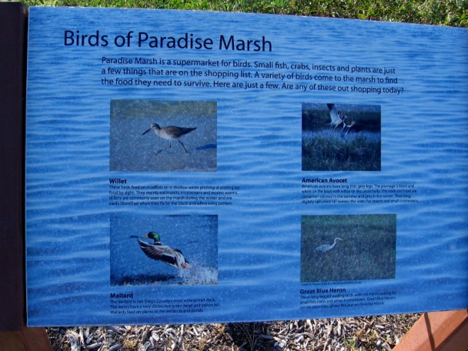 The birds of Paradise Marsh include the Willet, Mallard, American Avocet and the Great Blue Heron.