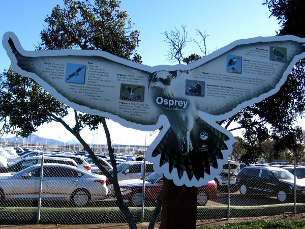 A sign describe ospreys, which can often be seen around San Diego Bay and our coastal estuaries.