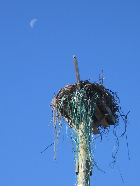 Looks like an osprey has collected all sort of odd materials for its nest!