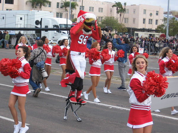 Swoop, the Utah mascot had a bit of trouble donning that Santa hat!