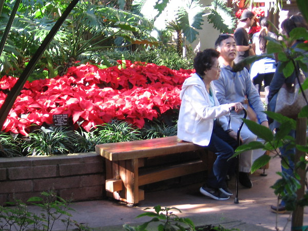 People take a break during December Nights by sitting near cheerful red poinsettias in the Botanical Building.