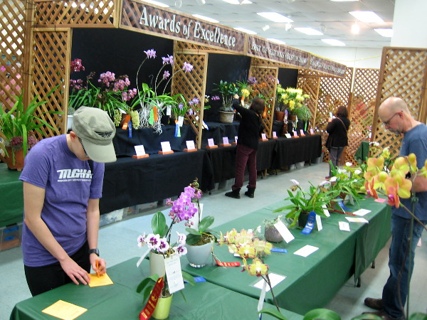 Orchid lovers around San Diego submitted their entries in the hopes of winning Best of Show.