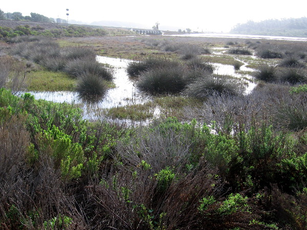 This coastal marsh in San Diego's North County is a special place where wildlife is abundant.