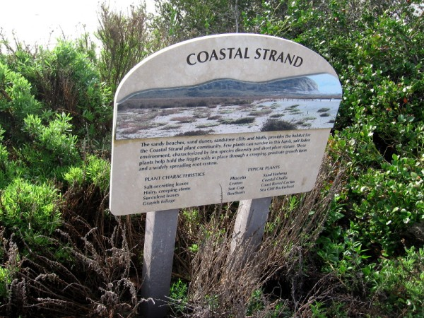 The sandy beaches, sand dunes, sandstone cliffs and bluffs, provides the habitat for the Coastal Strand plant community.