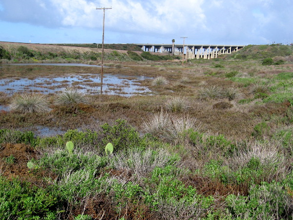 Looking across the wetland toward the train bridge near the beach.