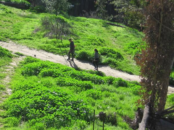 There's plenty of bright green down in the Balboa Park Rube Powell Archery Range.