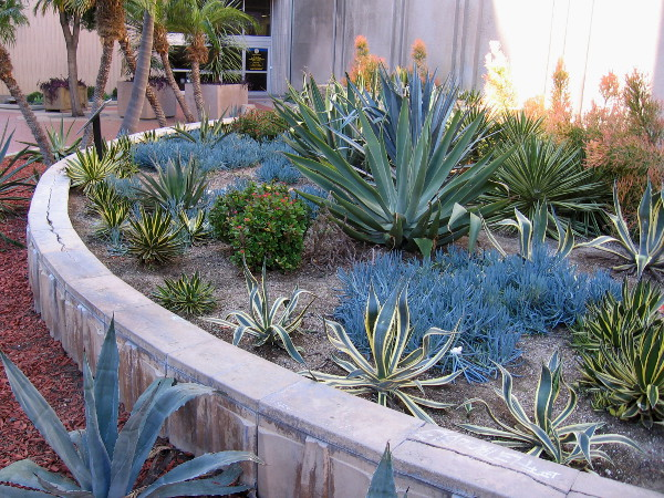 A side door to San Diego's City Administration Building lies beyond a small garden containing cacti and succulents.