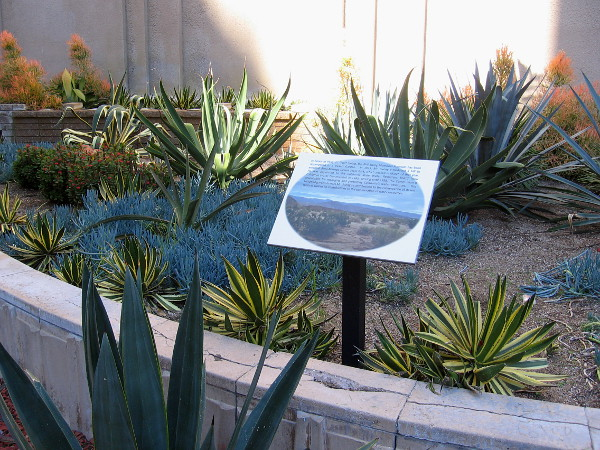 Sign explains the Phil Swing Memorial Fountain was re-purposed to a Desert Garden. In 1933, Mr. Swing introduced a bill to establish Anza-Borrego Desert State Park.