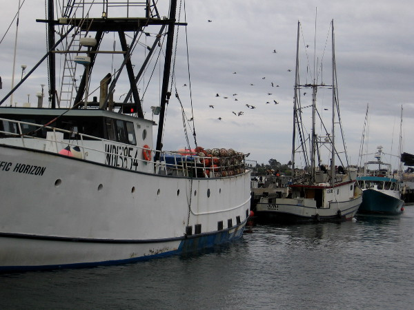 Gulls circle beyond boats tied up to the Tuna Harbor Dockside Market pier.