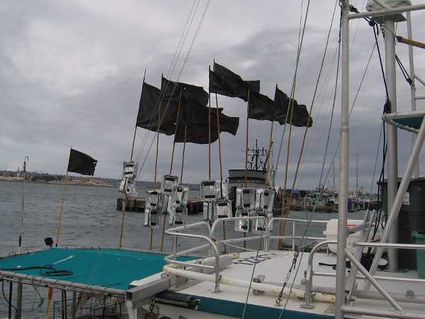 The wind on San Diego Bay was really picking up by mid-morning.