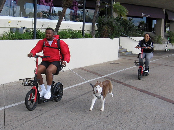 Another perfect day in San Diego for a walk, ride or four-legged run by the bay!
