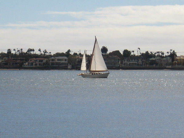 A bright sailboat on San Diego Bay, with Coronado in the background.