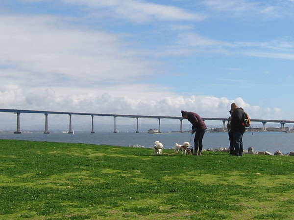 People with dogs on the grass, the Coronado Bay Bridge in the distance.