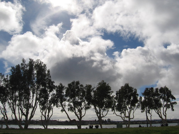 Trees and clouds seen from Embarcadero Marina Park South.