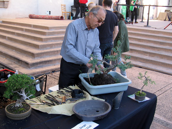 The San Diego Bonsai Club was demonstrating an ancient Asian art form.