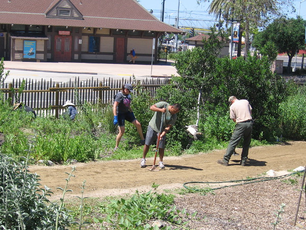 Volunteers work with a State Park Ranger in Old Town's native garden for Earth Day. The Old Town Transit Center is visible in the background.