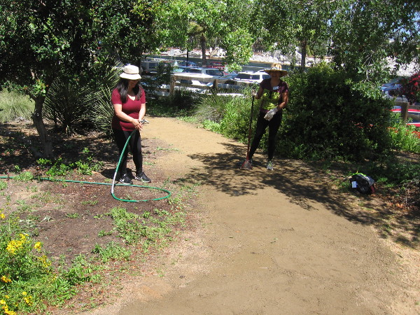 Hard-working volunteers could be seen all around the Native Plant Garden.