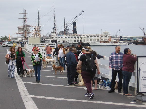 People wait in line for the first of four very unique harbor tours. It's the annual Pet Day on the Bay!