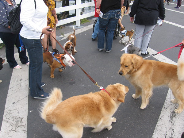 These furry passengers meet each other before boarding for a cruise on San Diego Bay.