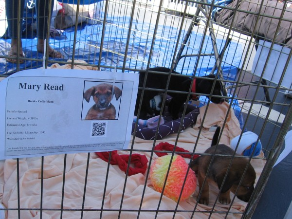 Mary Read hangs out with a tail-wagging friend, waiting for a forever home.