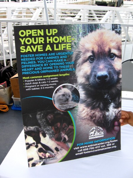 Open up your home--save a life. Foster homes are urgently needed for canines and felines. The Helen Woodward Animal Center with your help saves thousands of precious lives. Please visit animalcenter.org