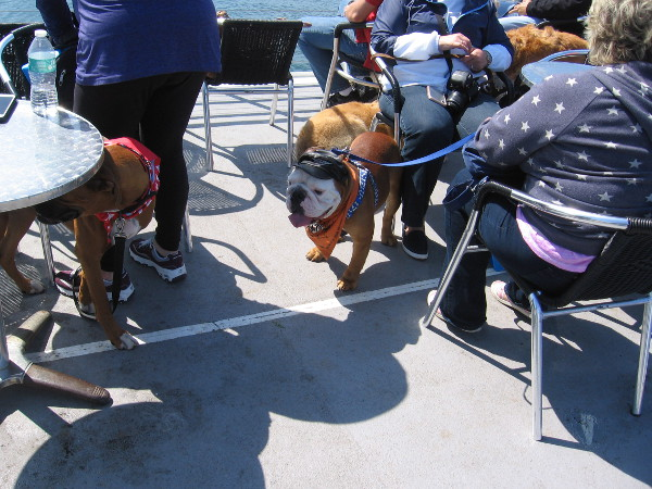 All sorts of characters are hanging out on the ship's deck.