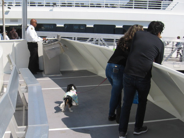 As we approach the dock, a dog supervises the maneuvering of the ship.