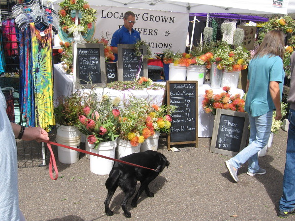 A dog heads over to smell some locally grown flowers.