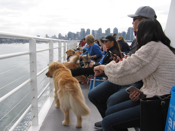 Pet Day on the Bay is a great annual event for those with two or four legs!