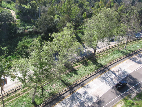 Near the center of Cabrillo Bridge. Trees in sunlight on the median of State Route 163, also known as Cabrillo Freeway.