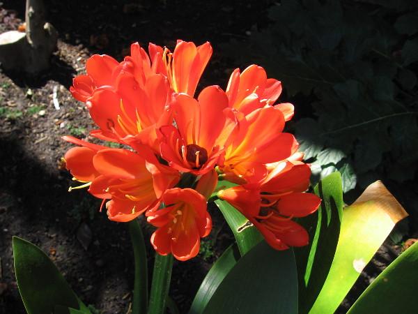Like orange flames on El Prado.