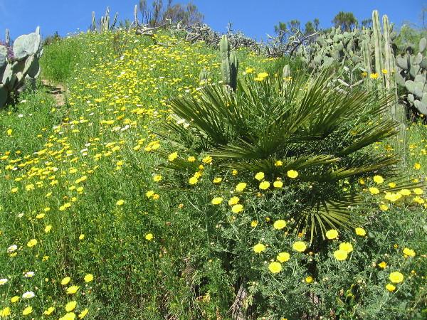 More abundant natural beauty.