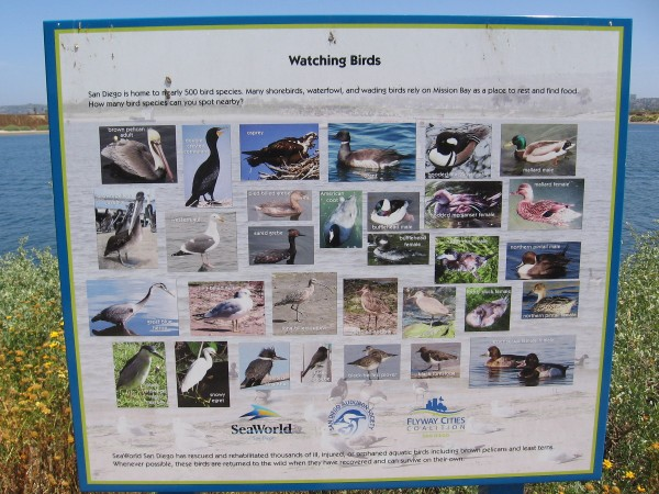 Sign identifies birds that might be seen here. San Diego is home to nearly 500 bird species.