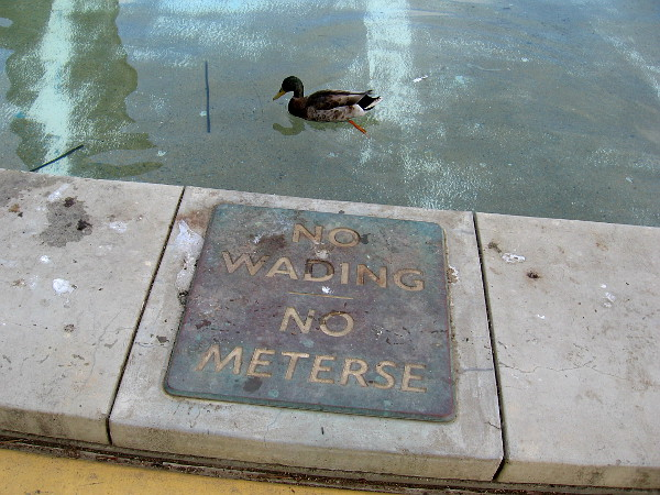 A duck disregards a sign by the Children's Park fountain.