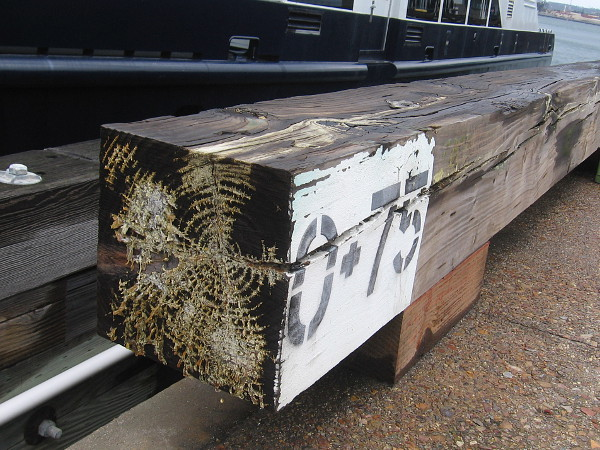 An interesting pattern in wet wood on the Broadway Pier.