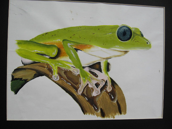 Isaac Benitez, Tree Frog, 2019. Tempera on paper. Grade 10, Lincoln High School.