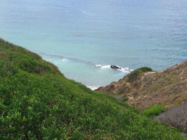 Looking down from the trail at native flora atop the cliffs above the beach. Dike Rock can be seen jutting through the breaking surf.