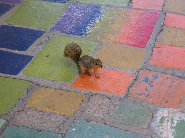 A squirrel in a colorful place!