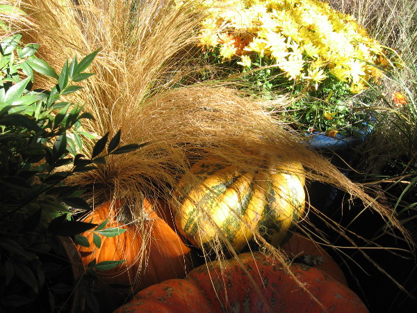 Pumpkins add color to the many plants growing inside the Botanical Building.