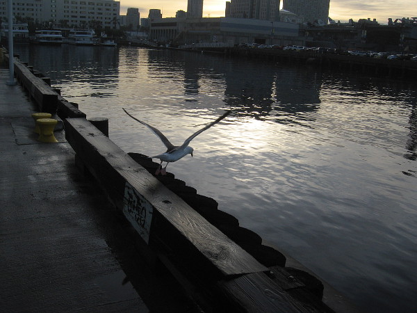 A gull takes flight as I turn on the pier back toward Broadway. Time to catch the trolley for work.