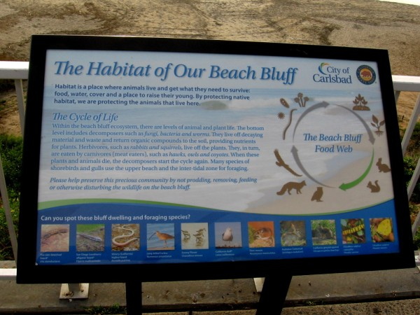 Sign above Carlsbad's beach bluff, describing its animals and plants, unique habitat and the cycle of life.