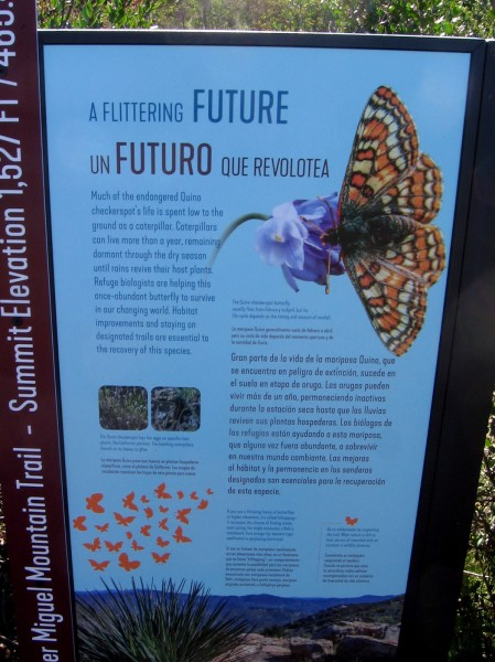 Second sign describes the Quino checkerspot butterfly, which is listed under the federal Endangered Species Act.